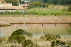 The Lake Chalikopoulou wetlands create a diverse habitat for wildlife.
